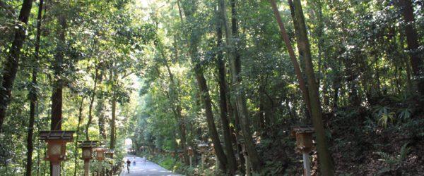 大神神社(三輪神社)二の鳥居を潜った奥は森のような木々の間の参道を通る